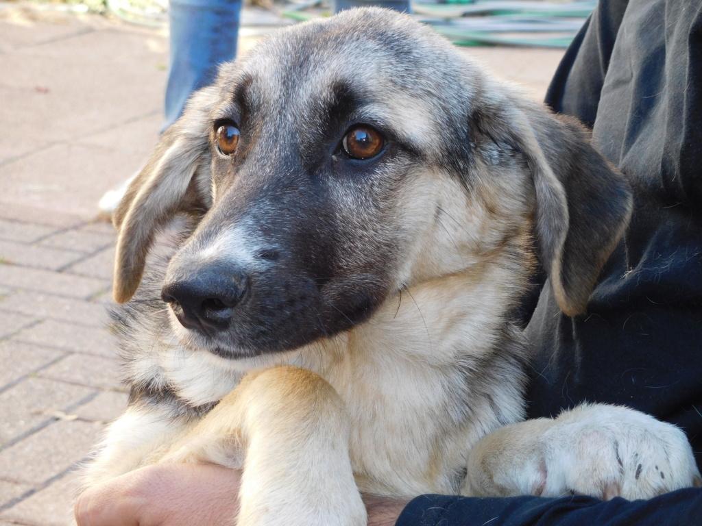 Era (ex-Fergie) - femelle - Târgu Frumos - réservée adoption (57) Dscn4813