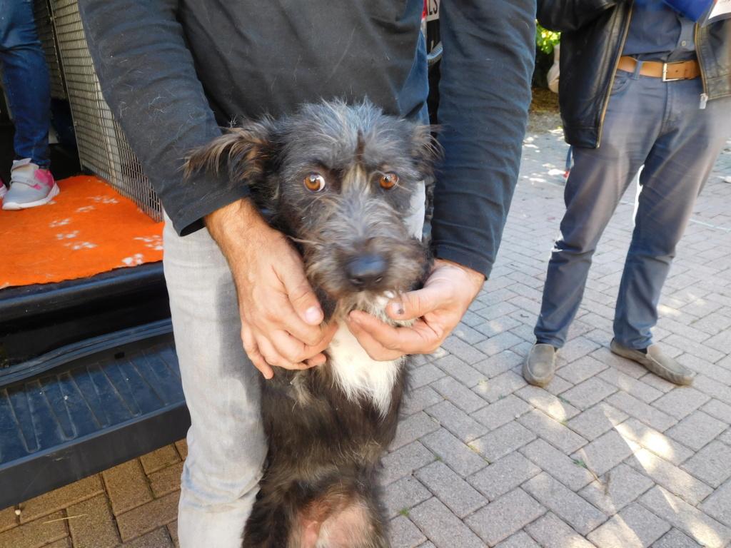 Polka - femelle - Fourrière de Târgu Frumos - Réservée adoption (67) Dscn4939