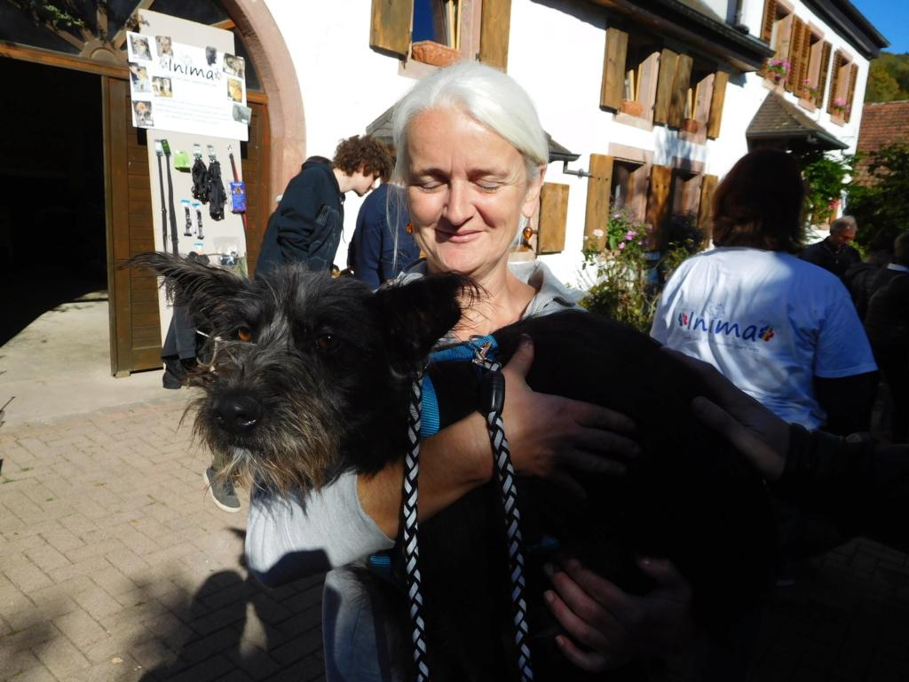 Polka - femelle - Fourrière de Târgu Frumos - Réservée adoption (67) Dscn4941
