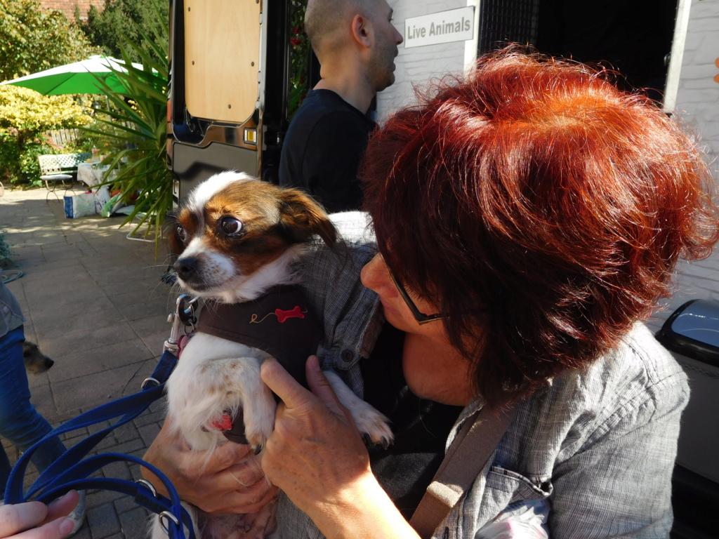 Tessa - femelle martyre - chez Rudy (Iasi) - réservée adoption (Suisse) Dscn4948
