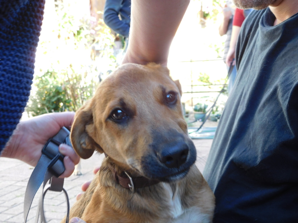 Zora - femelle - refuge de Arad - réservée adoption (67) Dscn4956