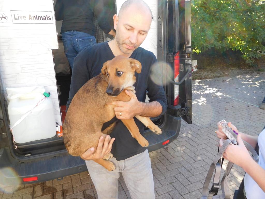 Zora - femelle - refuge de Arad - réservée adoption (67) Dscn4959