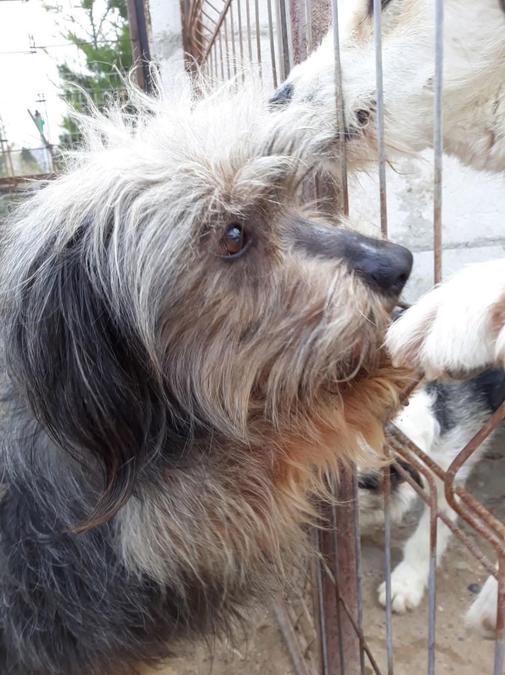 Dudley-mâle- refuge d'Arad - adopté via Arad Dudley16