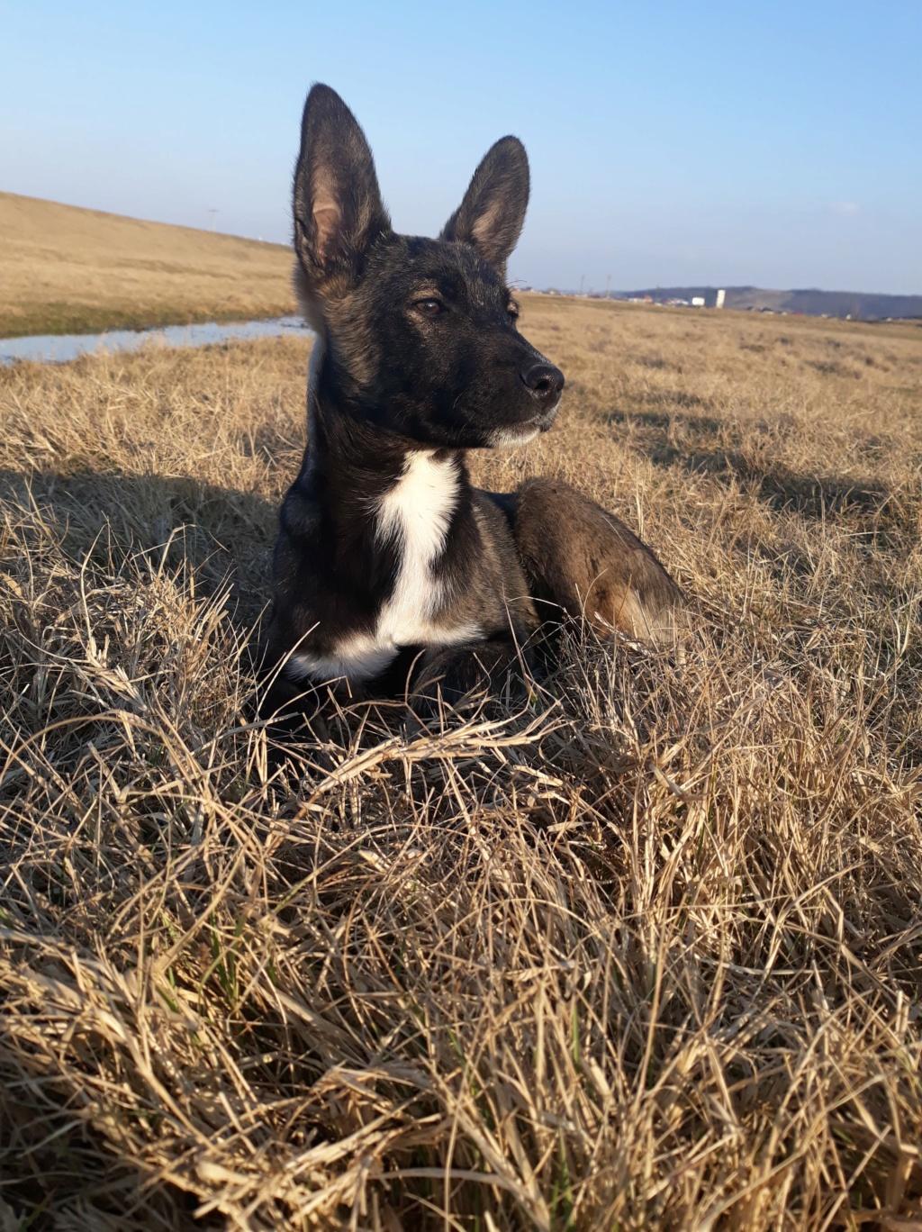 Archie- mâle- dans une famille d'accueil près de Târgu Frumos - sera en Famille d'Accueil dans le 67 en mars E528c610