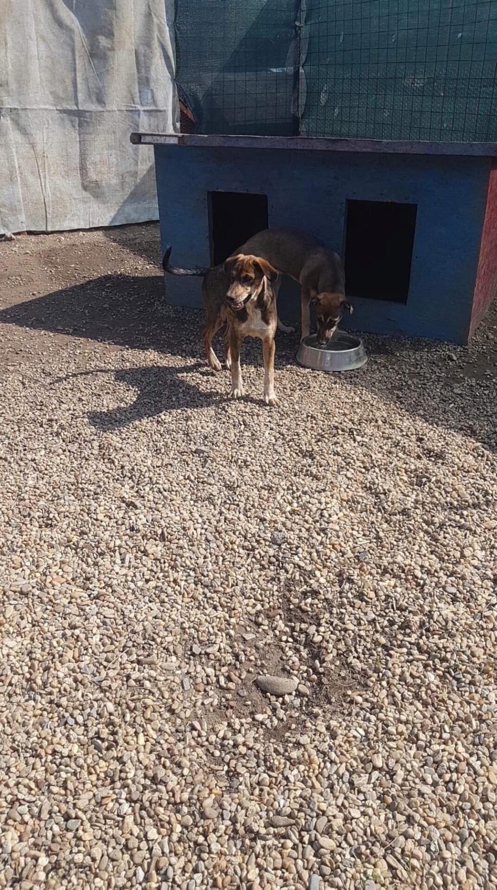 Emii- femelle- refuge d'Arad - Adoptée via Arad Eli_210