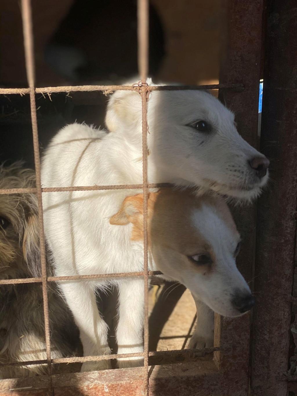 Nima- femelle- fourrière de Târgu Frumos - adoptée via Andreea Elika_10