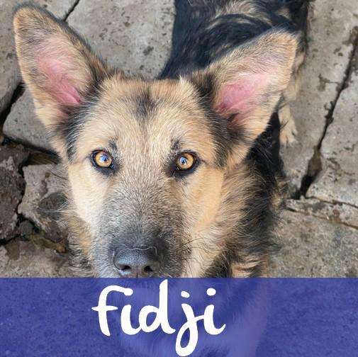 FidjiM
