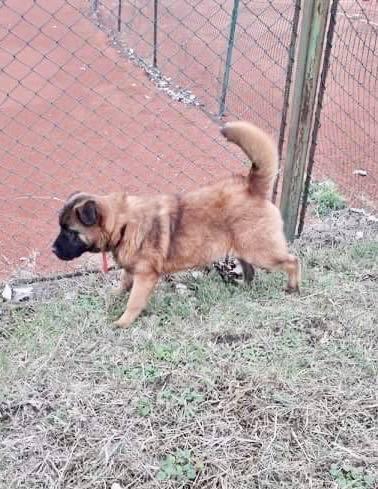 Tyson - mâle - refuge d'Arad - adopté via Arad Fiona_26