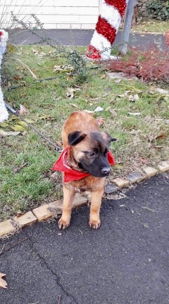 Tyson - mâle - refuge d'Arad - adopté via Arad Fiona_27
