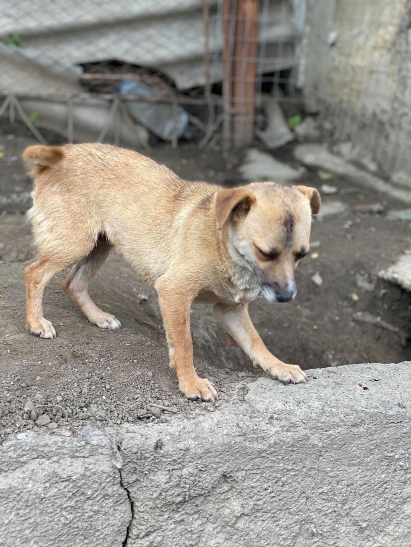 Fiora- femelle-fourrière de Târgu Frumos - en famille d'accueil dans le 68  Fiora_41