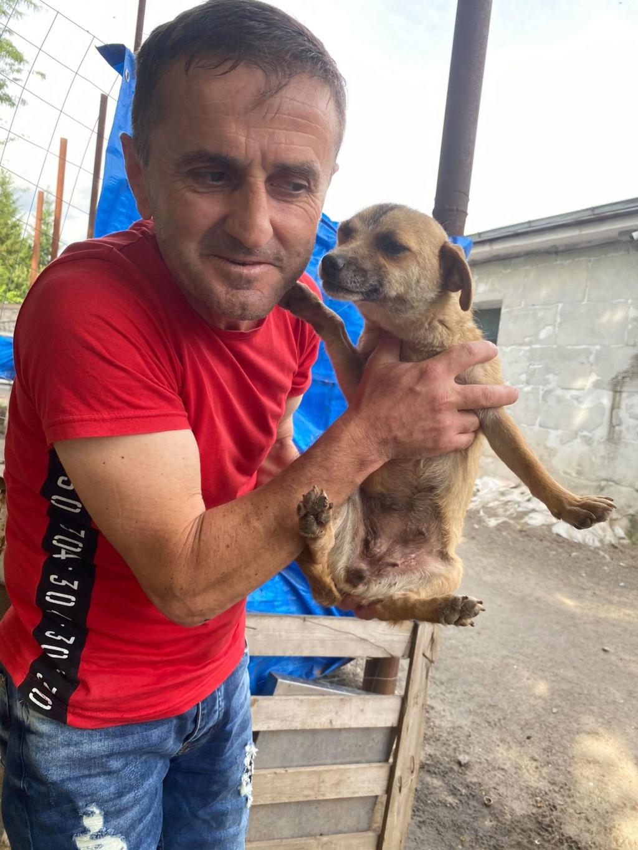 Fiora- femelle-fourrière de Târgu Frumos - en famille d'accueil dans le 68  Fiora_42