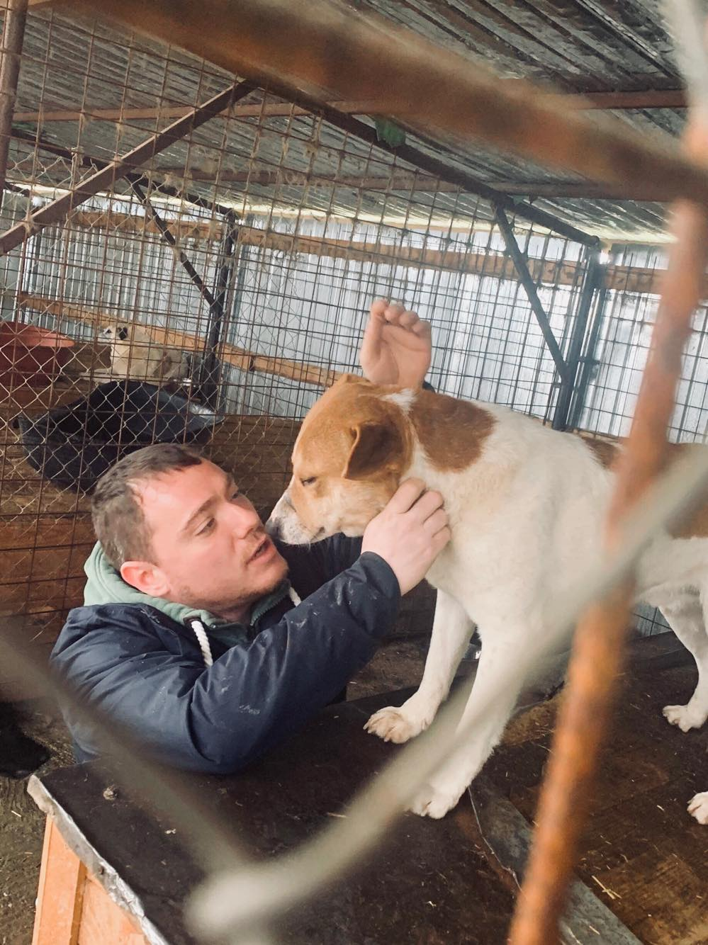 FlapJack - mâle - fourrière de Târgu Frumos - adopté via Andrea Flapja11