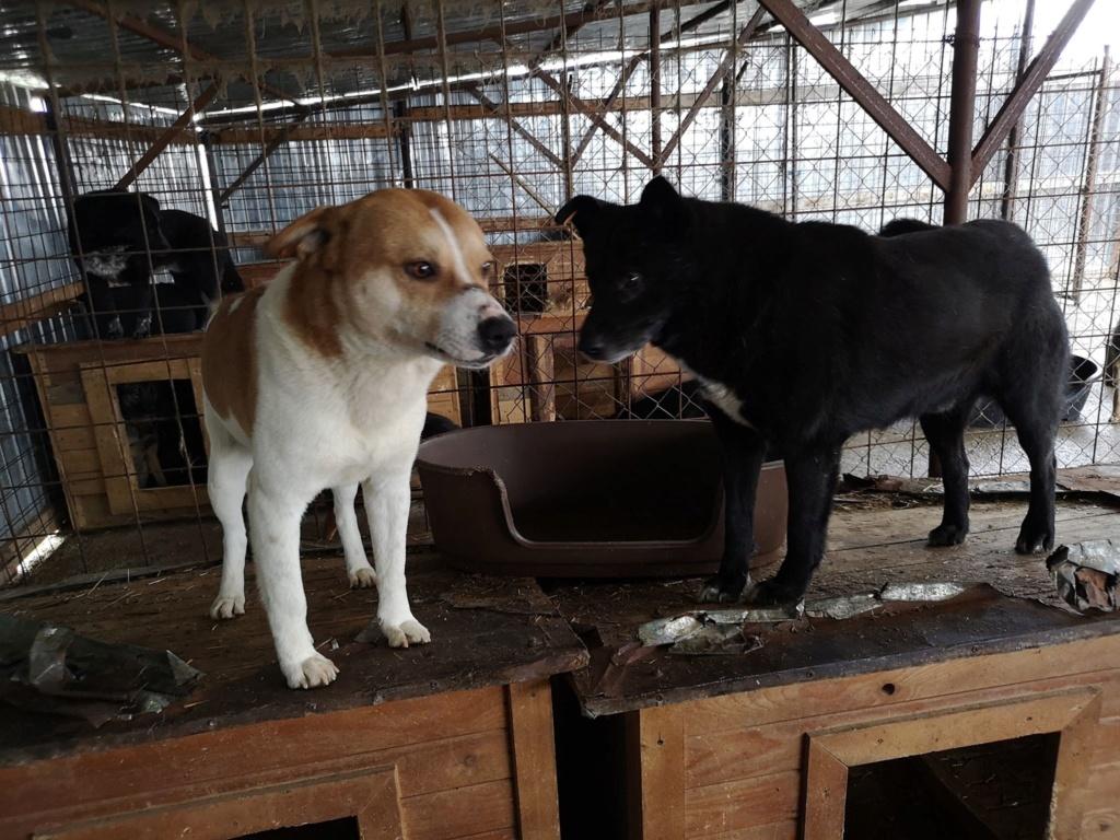 FlapJack - mâle - fourrière de Târgu Frumos - adopté via Andrea Flapja13