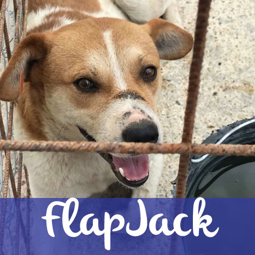 FlapjackM