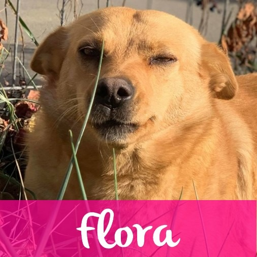 FloraF