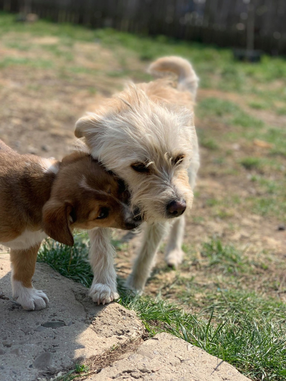 Flupke- mâle- refuge de Targu Frûmos - sera en famille d'accueil dans le 67 en mai Fluffy10