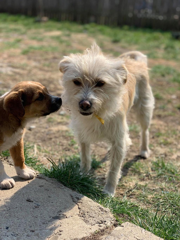 Flupke- mâle- refuge de Targu Frûmos - sera en famille d'accueil dans le 67 en mai Fluffy11