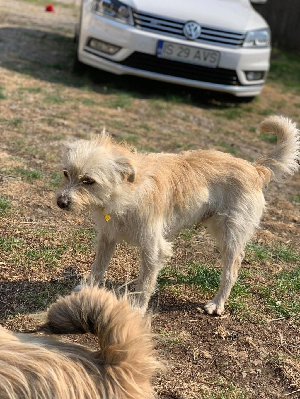Flupke- mâle- refuge de Targu Frûmos - sera en famille d'accueil dans le 67 en mai Fluffy13