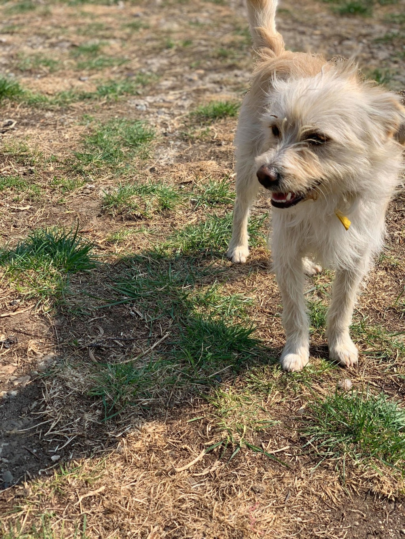 Flupke- mâle- refuge de Targu Frûmos - sera en famille d'accueil dans le 67 en mai Fluffy14