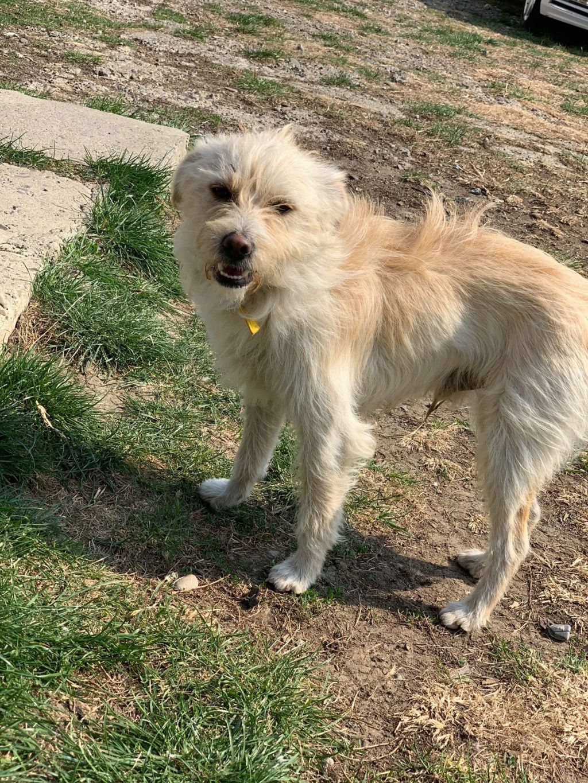 Flupke- mâle- refuge de Targu Frûmos - sera en famille d'accueil dans le 67 en mai Fluffy15