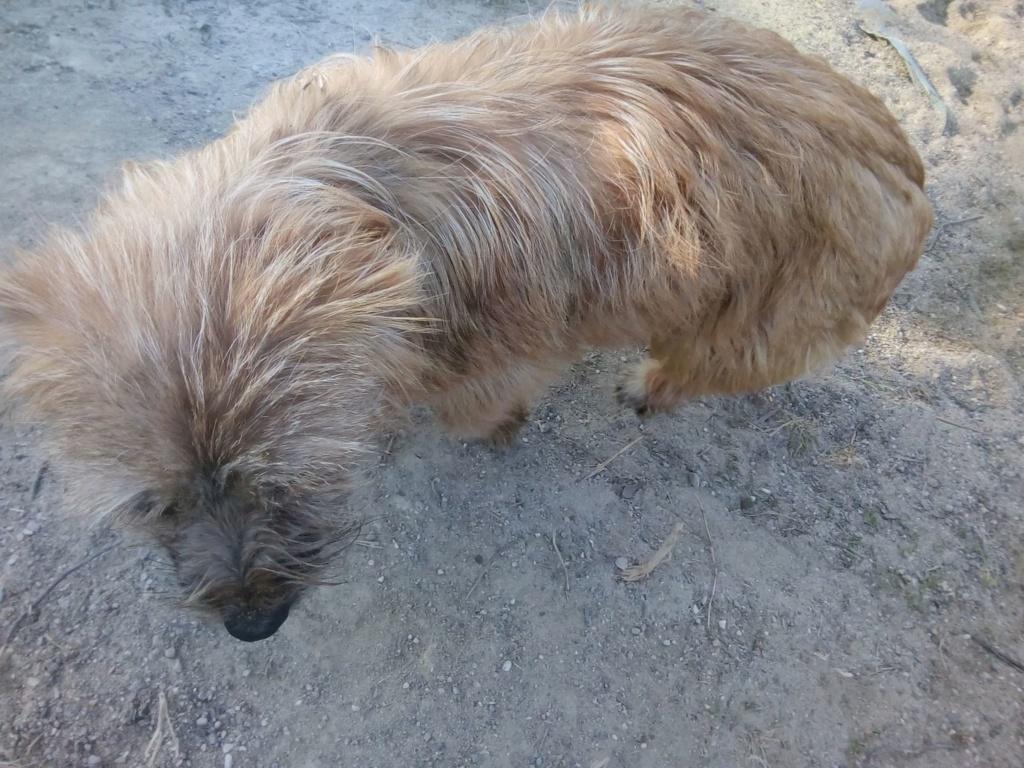 Fluffy-femelle- refuge de Targu Frûmos - Adoptée via Andreea Fluffy20