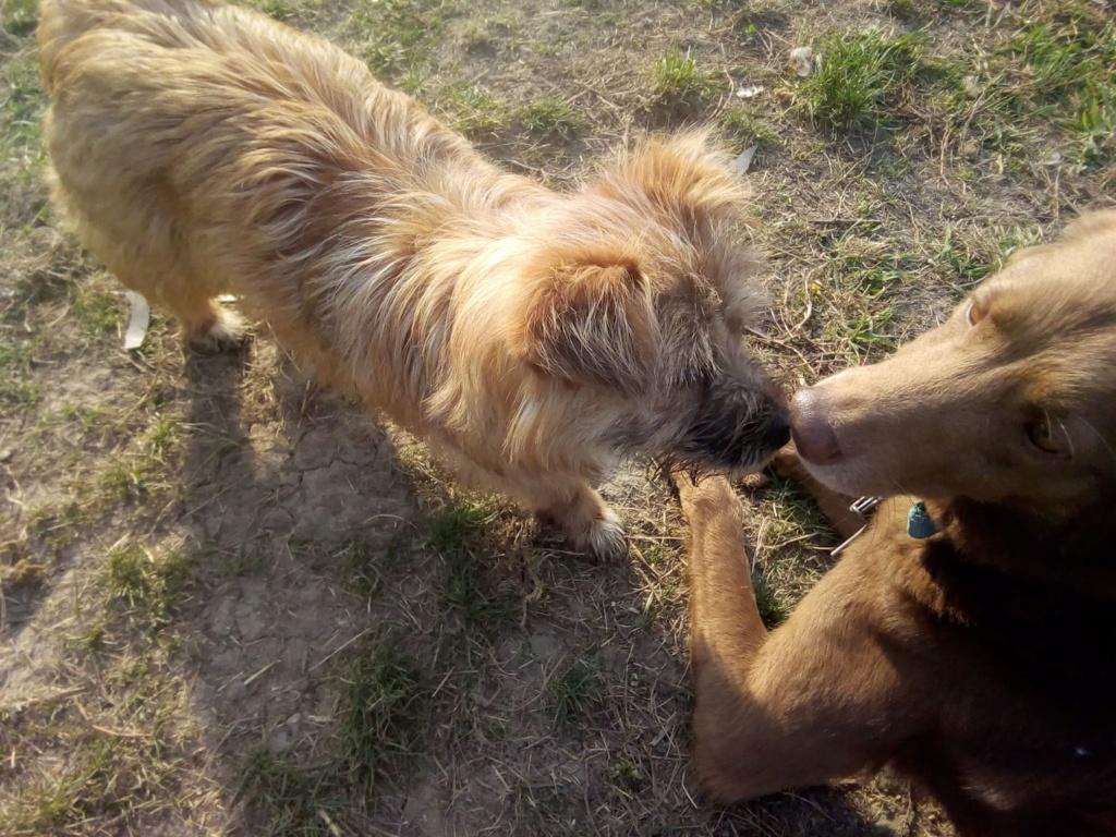 Fluffy-femelle- refuge de Targu Frûmos - Adoptée via Andreea Fluffy21