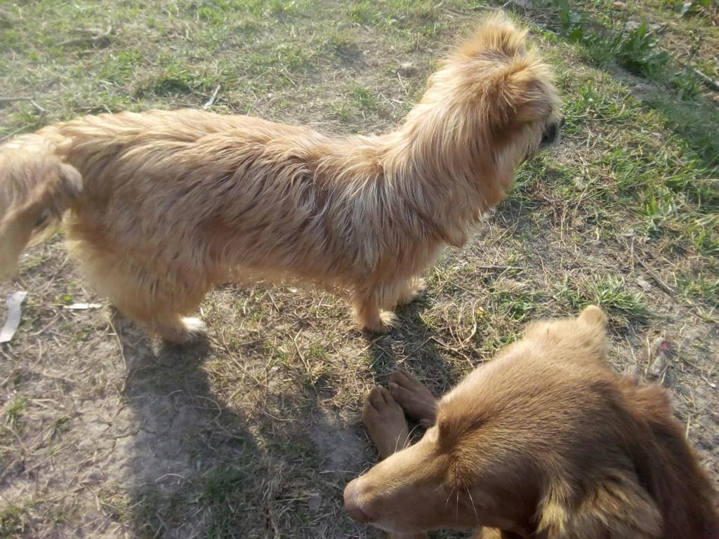 Fluffy-femelle- refuge de Targu Frûmos - Adoptée via Andreea Fluffy24