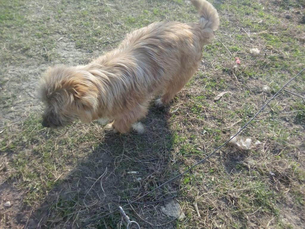 Fluffy-femelle- refuge de Targu Frûmos - Adoptée via Andreea Fluffy27