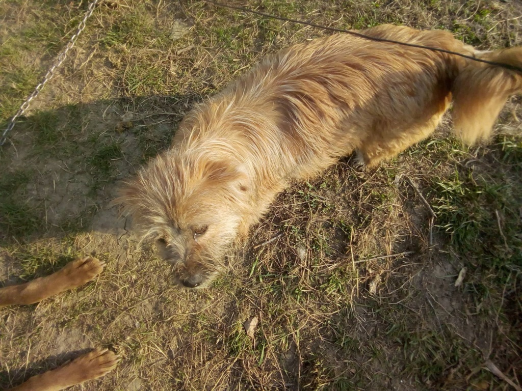 Fluffy-femelle- refuge de Targu Frûmos - Adoptée via Andreea Fluffy28