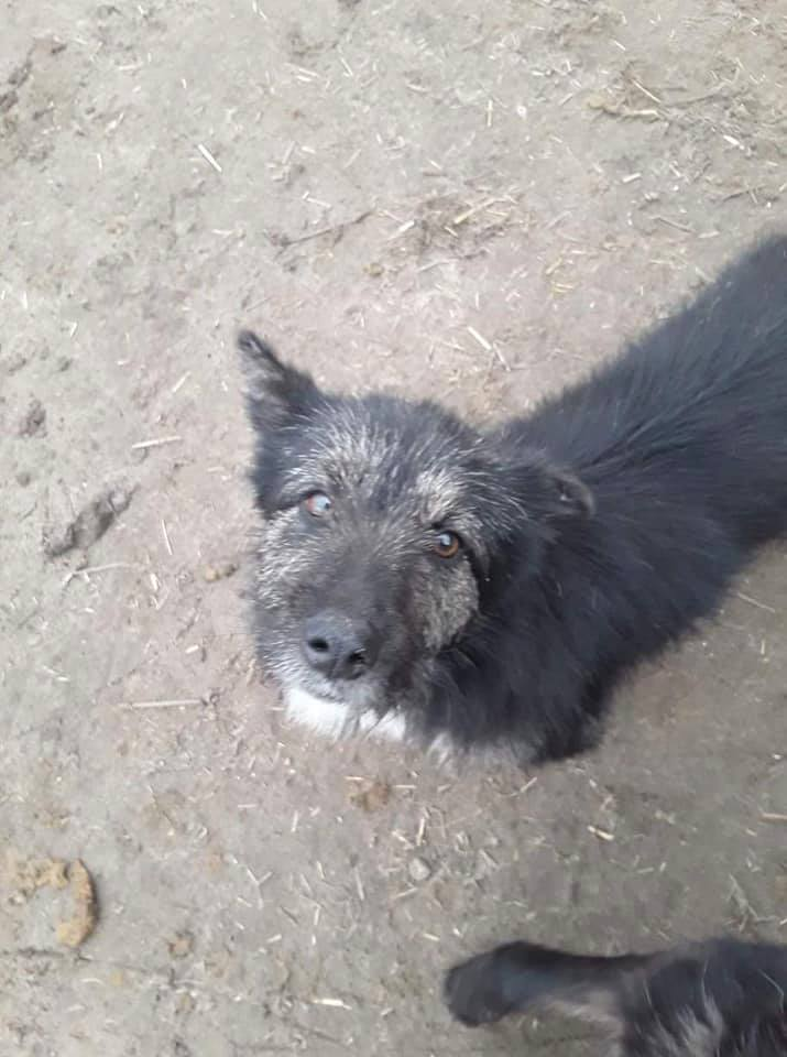 Fluffey-mâle- refuge de Desa Fluffy30