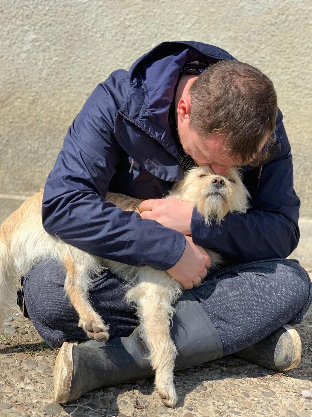 Flupke- mâle- refuge de Targu Frûmos - sera en famille d'accueil dans le 67 en mai Flupke14