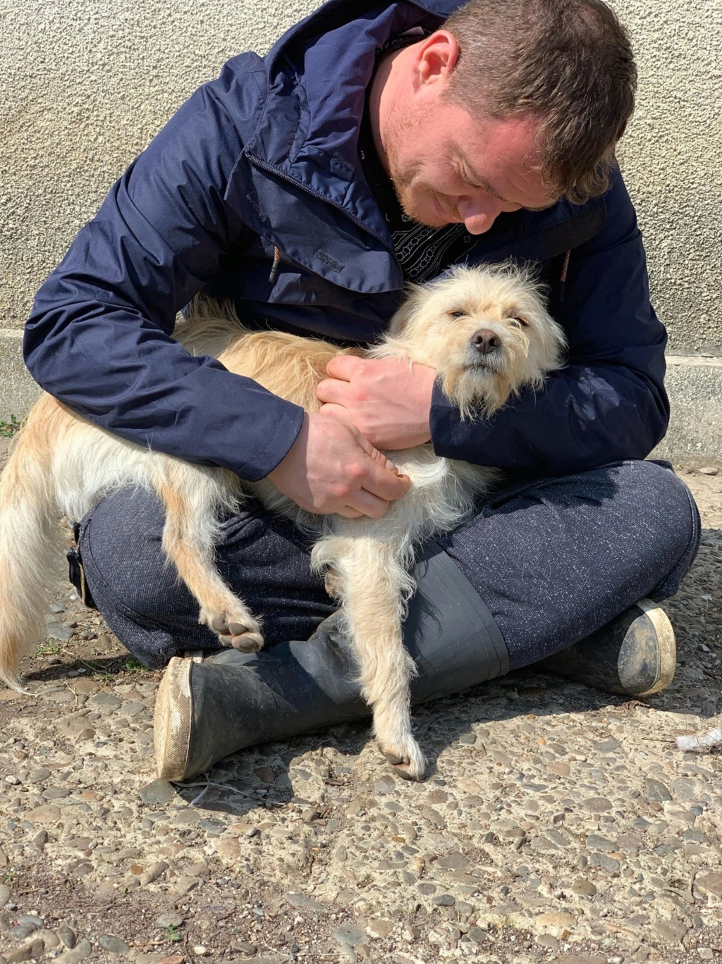 Flupke- mâle- refuge de Targu Frûmos - sera en famille d'accueil dans le 67 en mai Flupke15
