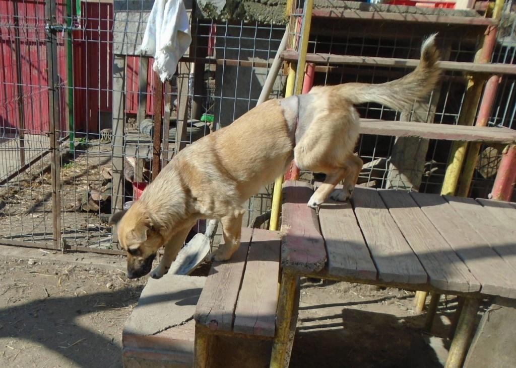 Fresca- femelle-refuge d'Arad - Adoptée via Arad Fresca15