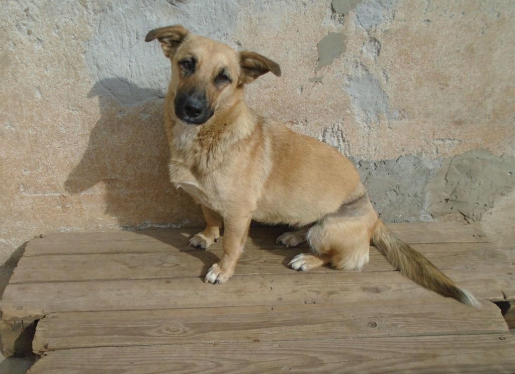 Fresca- femelle-refuge d'Arad - Adoptée via Arad Fresca17