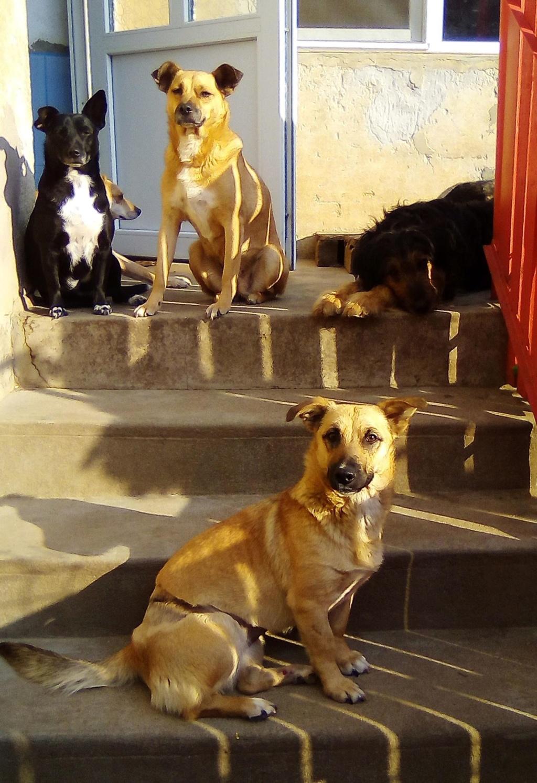 Fresca- femelle-refuge d'Arad - Adoptée via Arad Fresca30