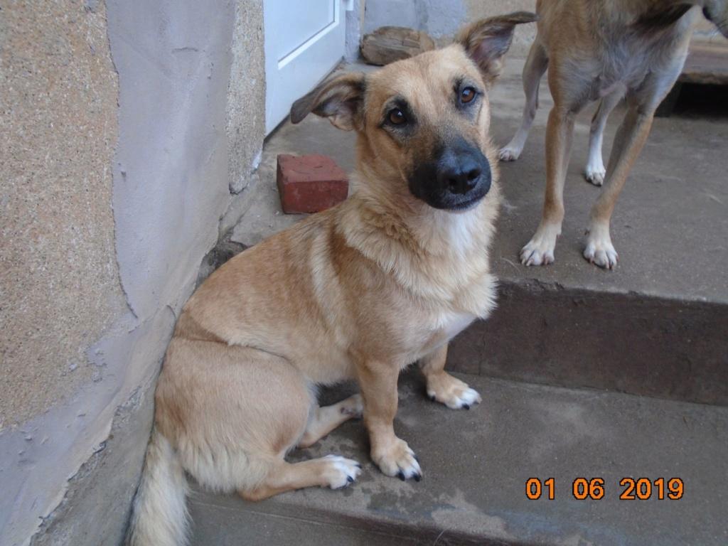 Fresca- femelle-refuge d'Arad - Adoptée via Arad Fresca33