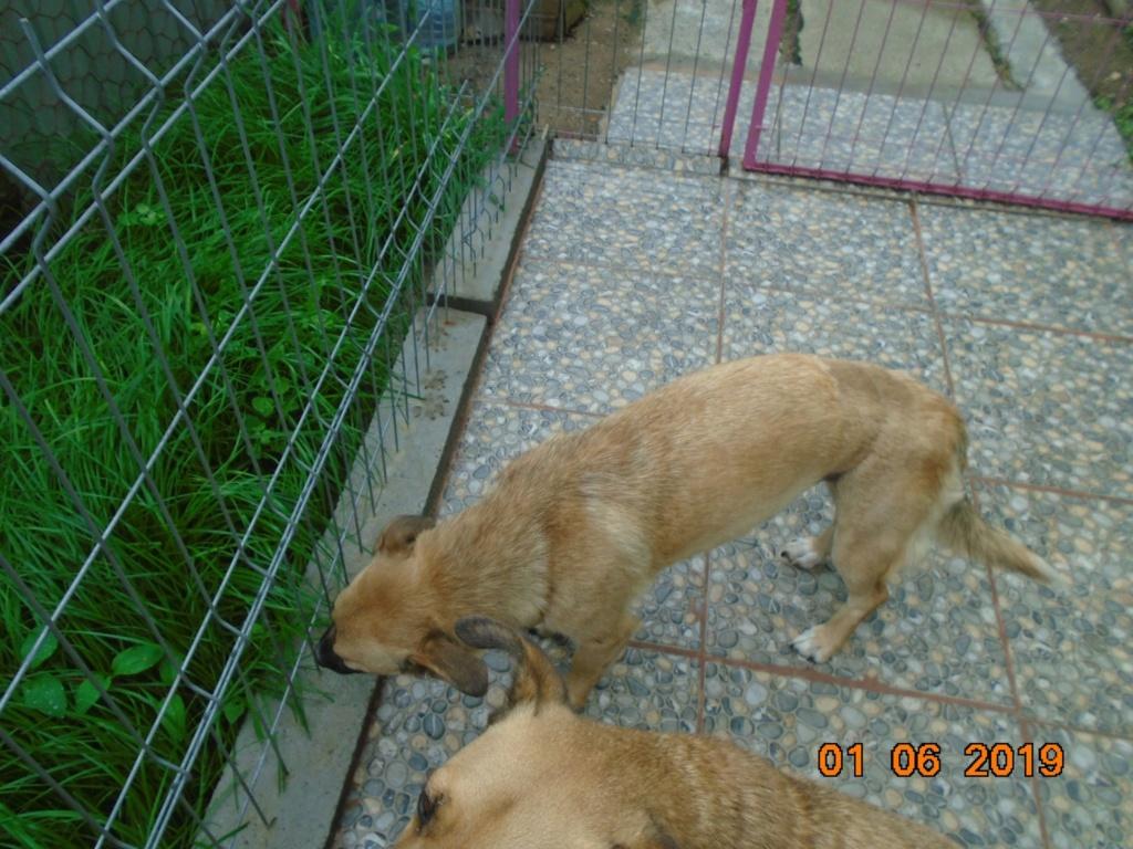Fresca- femelle-refuge d'Arad - Adoptée via Arad Fresca36