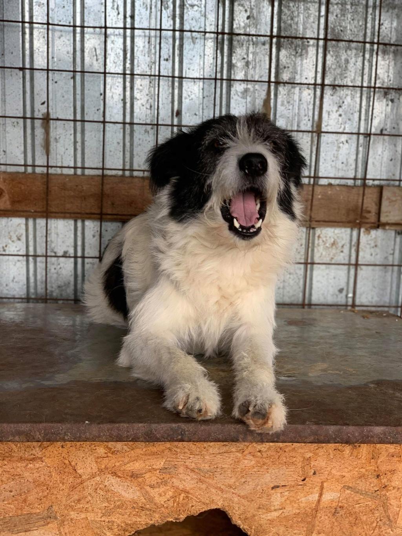 Garick- mâle- fourrière de Târgu Frumos - adopté via Andreea Garick14
