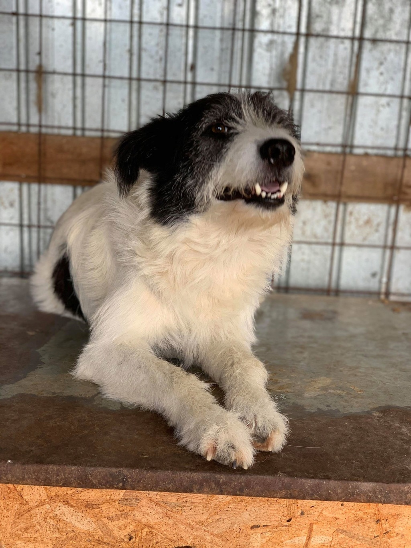 Garick- mâle- fourrière de Târgu Frumos - adopté via Andreea Garick16