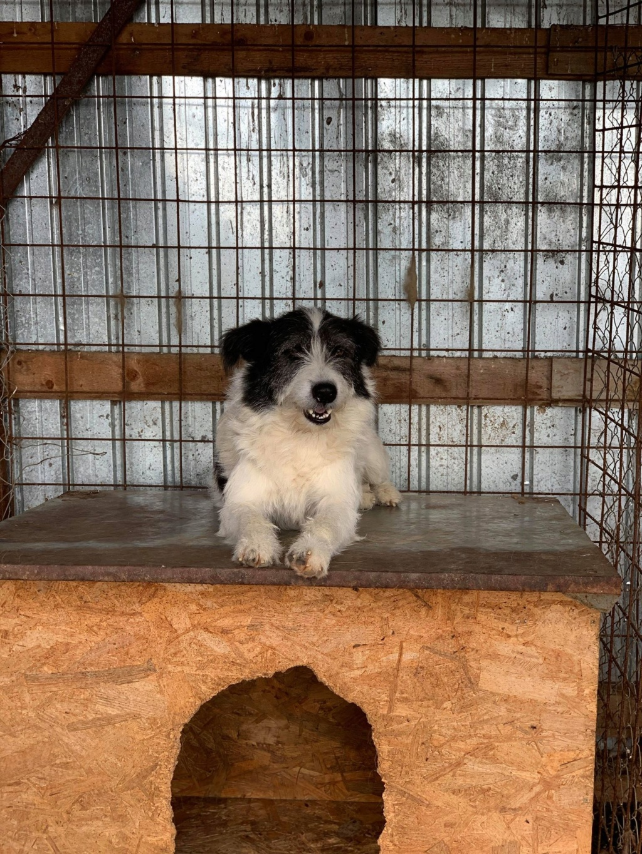 Garick- mâle- fourrière de Târgu Frumos - adopté via Andreea Garick17