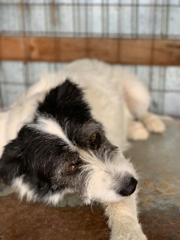 Garick- mâle- fourrière de Târgu Frumos - adopté via Andreea Garick18
