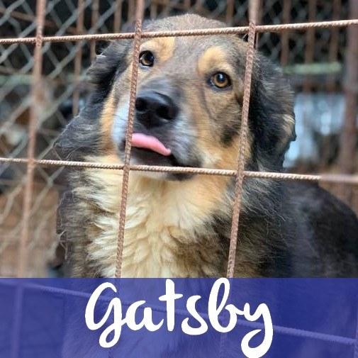 GatsbyM