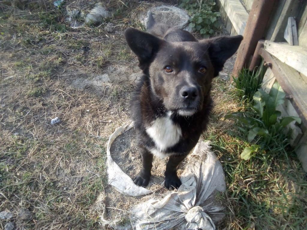 Georgie-mâle- refuge de Targu Frumos Georgi15
