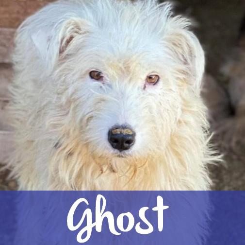 GhostM