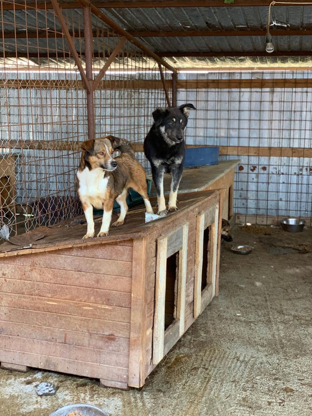 Ginka - femelle - fourrière de Târgu Frumos - sera en famille d'accueil dans le 67 en mai Ginka11