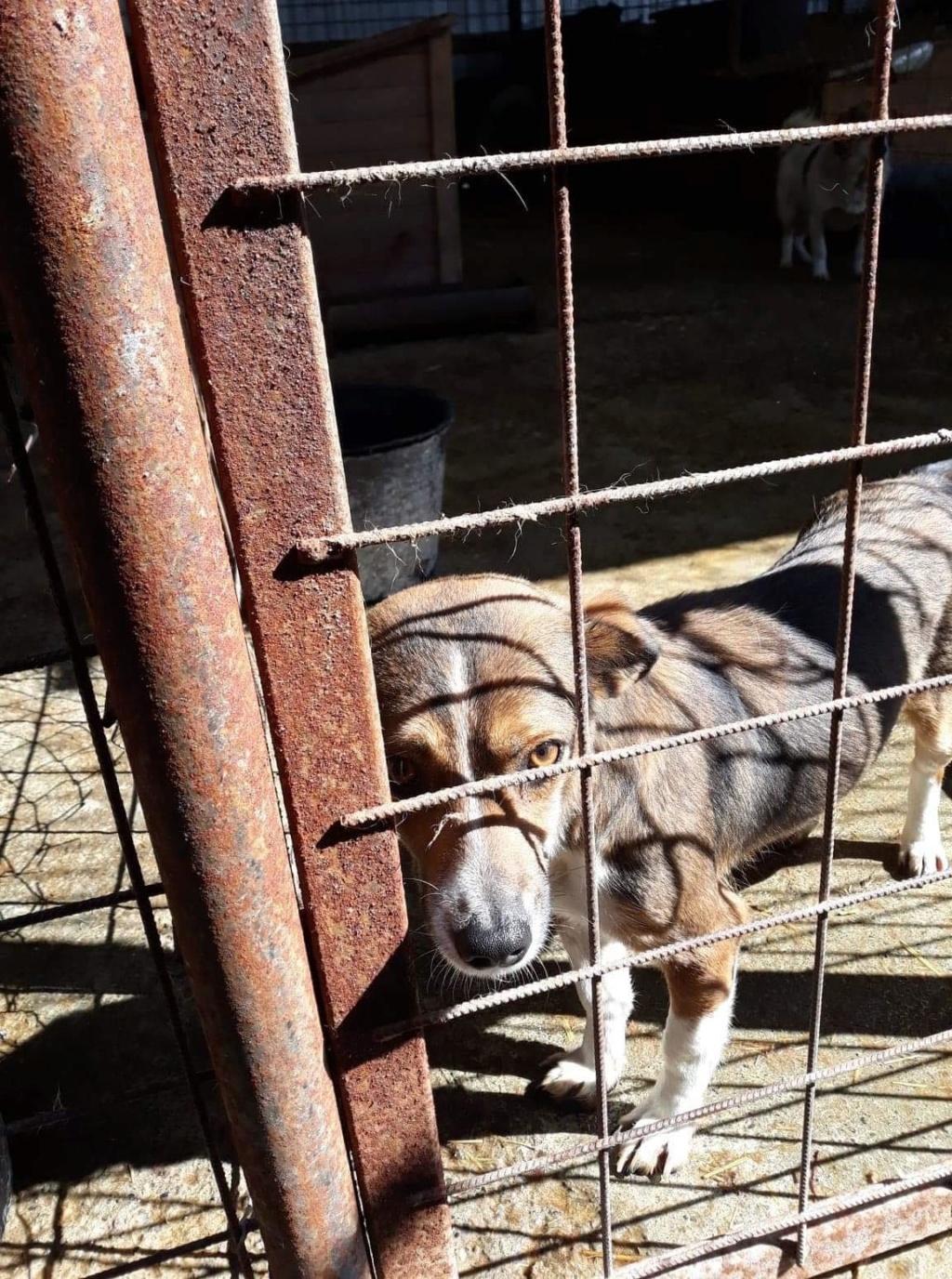 Ginka - femelle - fourrière de Târgu Frumos - sera en famille d'accueil dans le 67 en mai Ginka_10