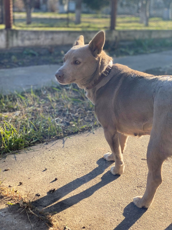 Glue- femelle- fourrière de Târgu Frumos - adoptée via Andreea Glue_610