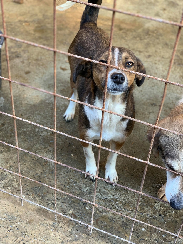 Ginka - femelle - fourrière de Târgu Frumos - sera en famille d'accueil dans le 67 en mai Grinka10