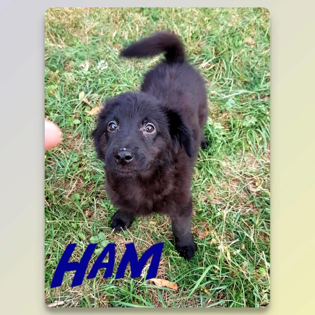 Elliot (ex Hamy) - mâle- refuge d'Arad - Réservée adoption (67) Ham_110