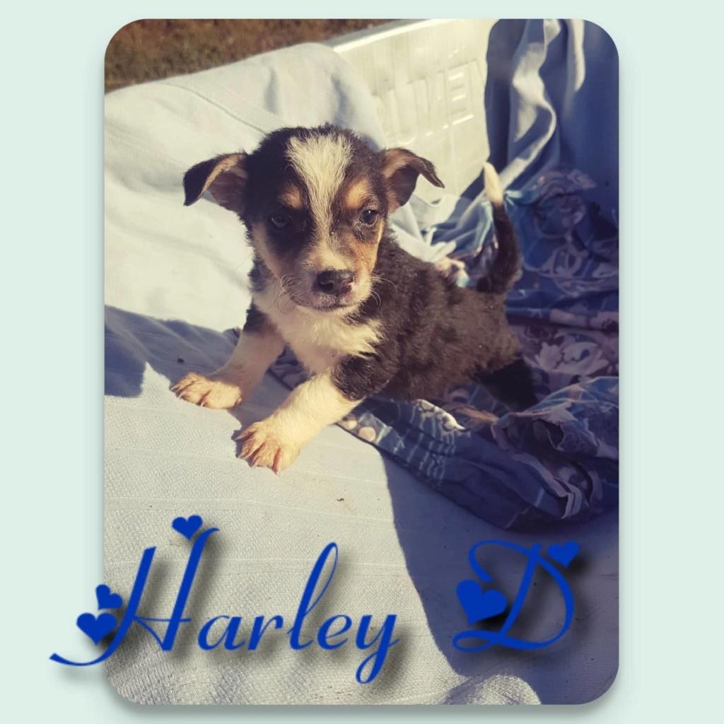 Harley- mâle- refuge d'Arad - adopté via Arad Harley12